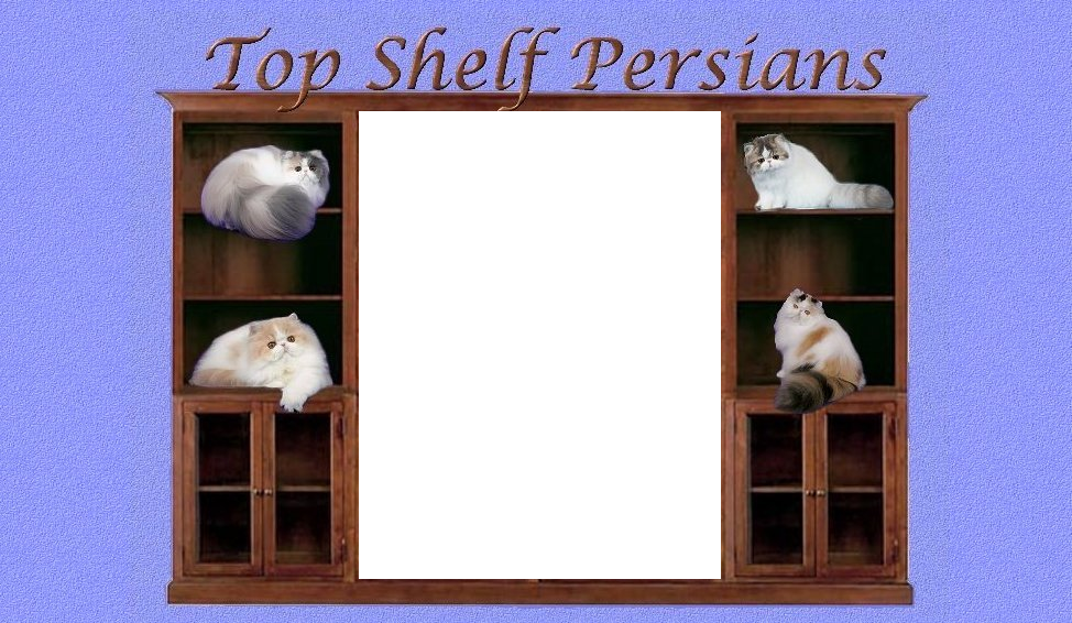 Bookcase with four Persians on the shelves